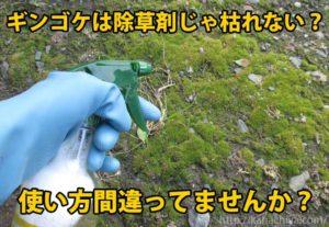 ギンゴケ 除草剤