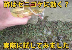 ゼニゴケと酢