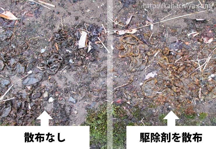 コケそうじ散布の比較