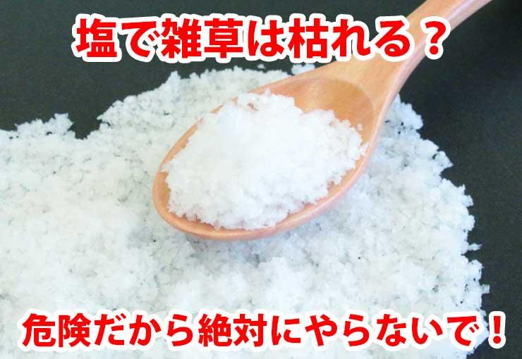 塩を使った雑草除草