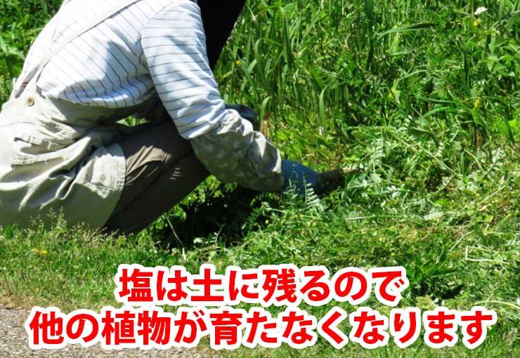 塩は土に残るで他の植物が育たなくなります