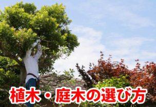 植木の選び方