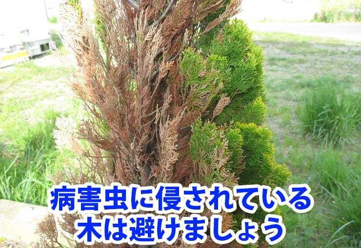 病害虫に侵されている木は避けましょう