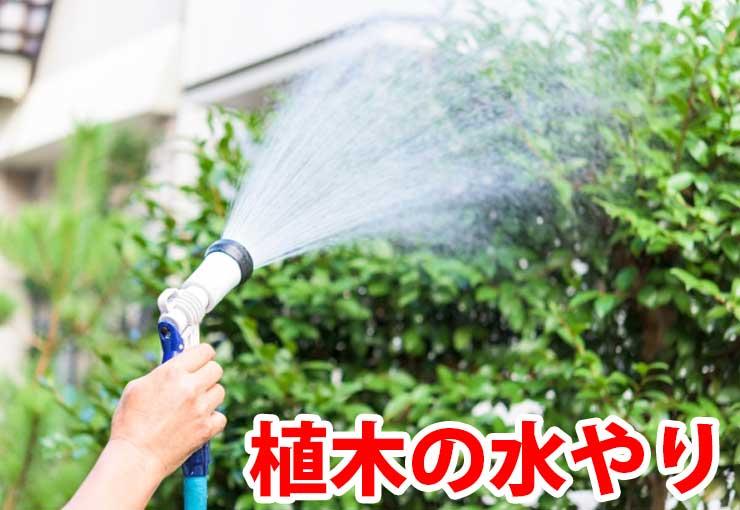 植木の水やり