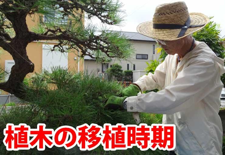 植木の移植時期