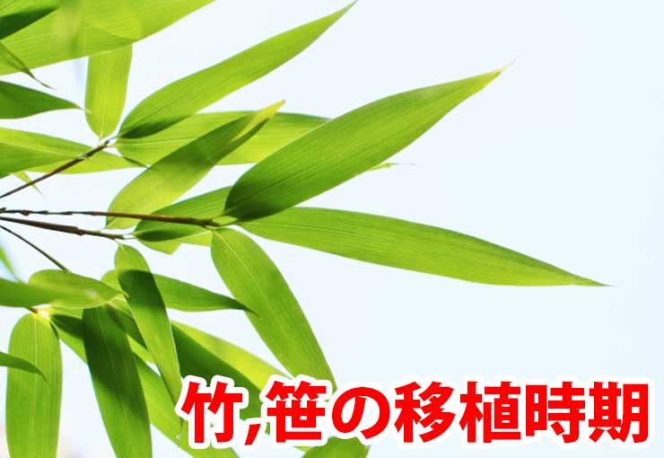 竹、笹の植え替え時期