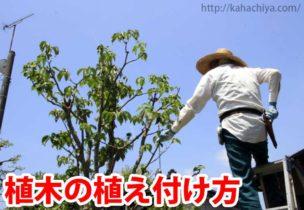 植木の植え付け方