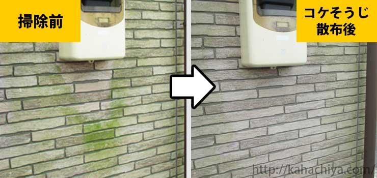 外壁の苔駆除