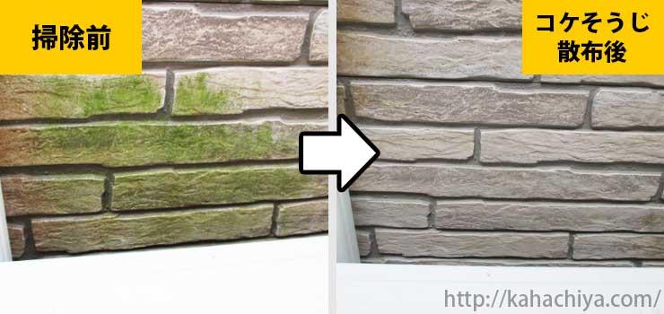 外壁の苔駆除例