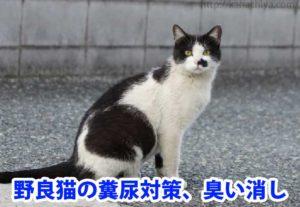 野良猫の糞尿、臭い消し