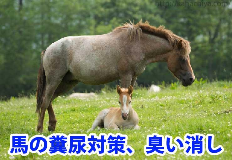 馬の糞尿の臭い消し