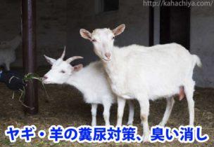 ヤギ・羊の糞尿対策