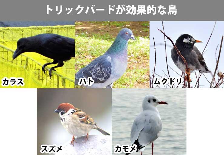 トリクバードが効果的な鳥
