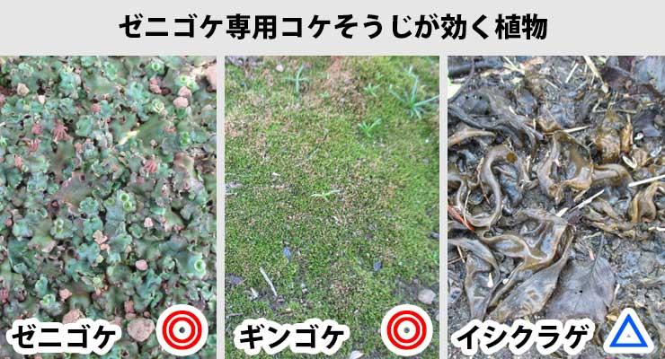ゼニゴケ専用コケそうじで枯らせる植物