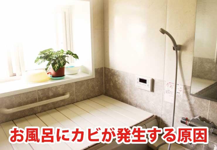 お風呂にカビが発生する原因