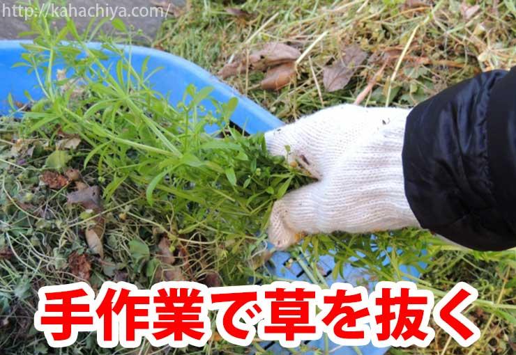 手作業で雑草を抜く
