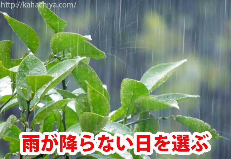 雨が降らない日を選ぶ