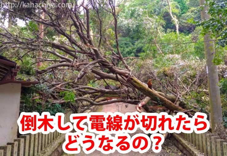 倒木して電線が切れたらどうなるの?
