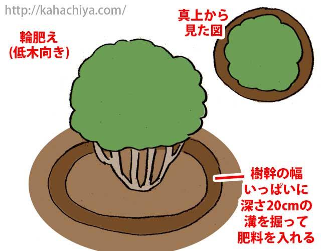 低木の寒肥