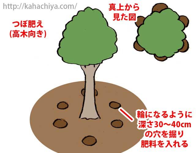 高い木の寒肥