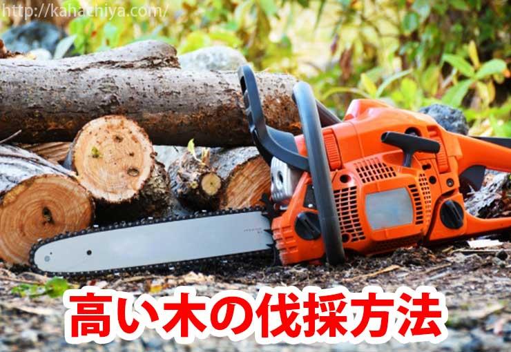 高い木の伐採方法