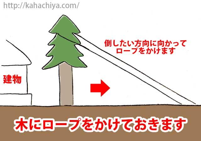 木を倒す方向にロープをかけます