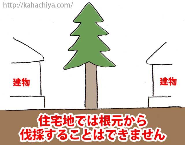 住宅地では根元から伐採できません