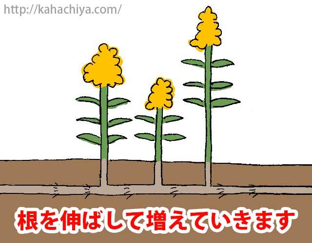 根を伸ばして増える