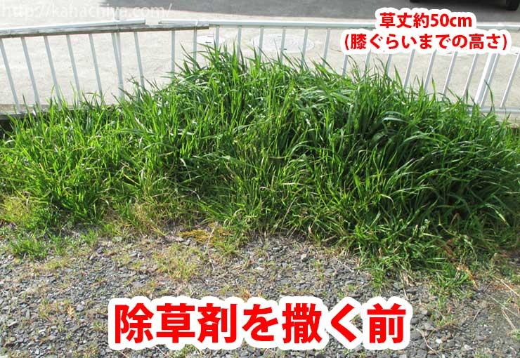 除草剤を撒く前