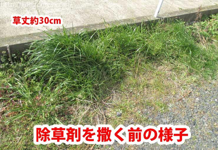 除草剤を散布する前の様子