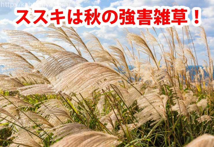 ススキは秋の強害雑草