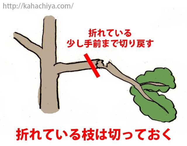 折れている枝は切る