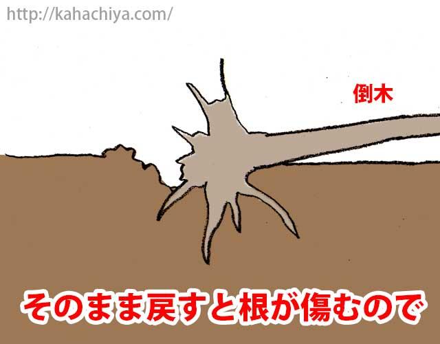 倒れている木を起こす