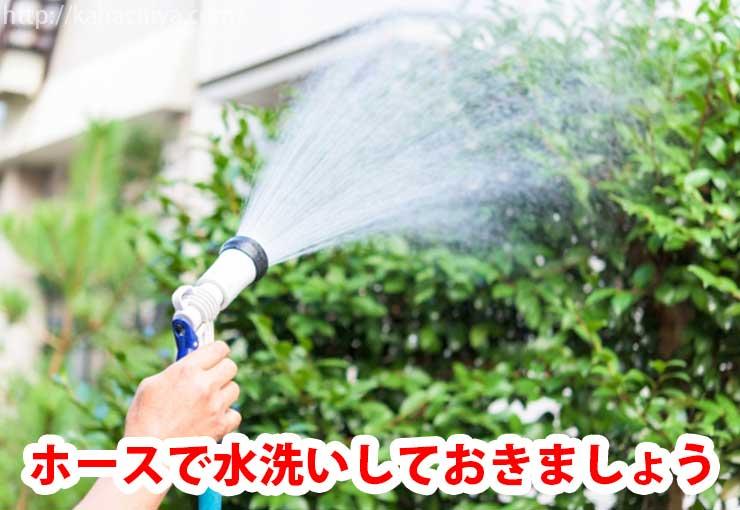 樹木を水洗いする