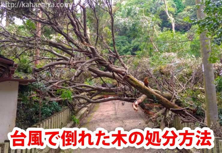 台風で倒れた木の処分方法