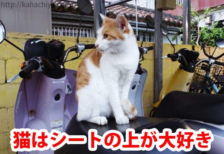 猫はシートの上が大好き