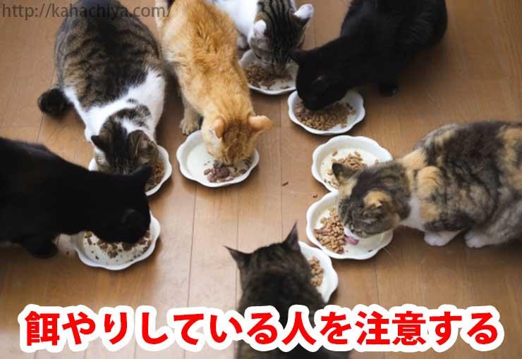 餌やりしている人を注意する