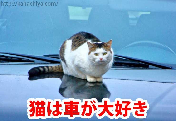 猫は車が大好き