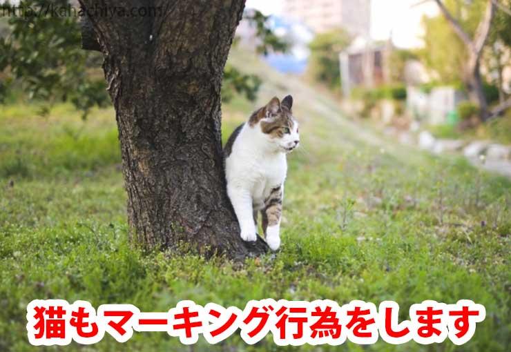 猫もマーキング行為をします