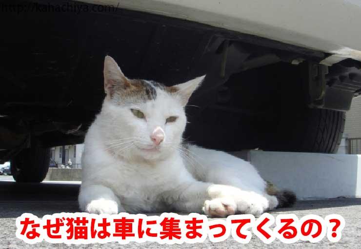 なぜ猫は車に集まってくるの?
