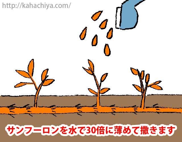 笹を枯らす