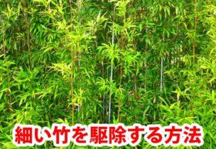 細い竹を駆除する方法