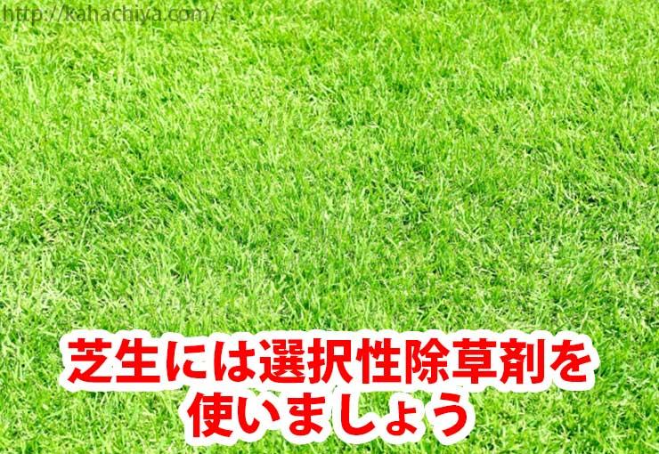 芝生には選択性除草剤を使いましょう