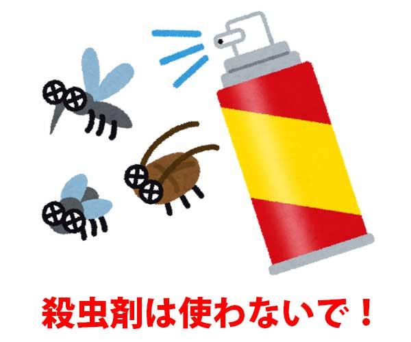 殺虫剤は使わないで!