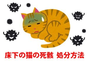 床下の猫の死骸
