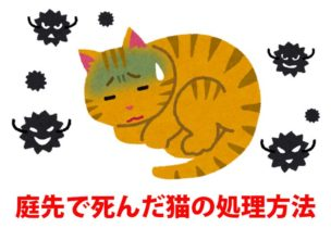 庭先で死んだ猫の処理方法