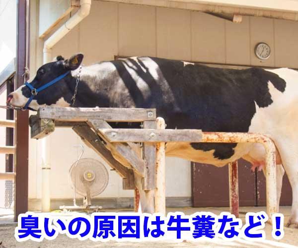 臭いの原因は牛糞など