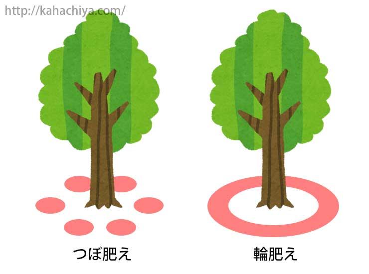 肥料を与える場所