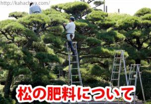 松の肥料について