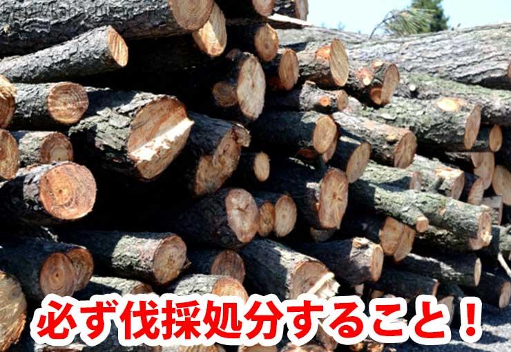 必ず伐採処分すること!
